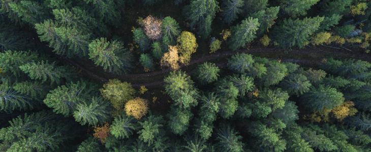 skogbruk