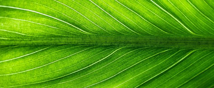 Bildet viser et grønt blad som symboliserer miljø