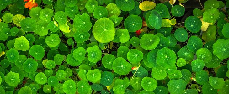 bilde av grønne blader