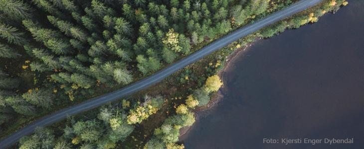 Bilde av skog og en veg i fugleperspektiv