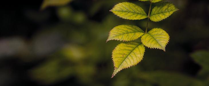Bilde av et grønt blad